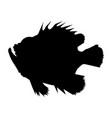 exotic ocean fish vector image