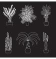 Desert plant of palm trees on white vector image