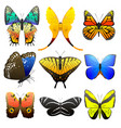 different butterfly with abstract decorative vector image