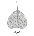 Pipal leaf vector image