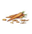 Hand drawn carrots vector image