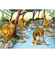 Four giraffes drinking water from the river vector image