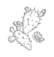 Cactus flower isolated vector image