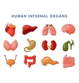 Internal organs vector image