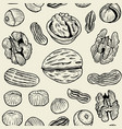 walnut background pattern vector image