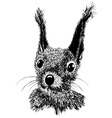 Squirrel head animal for t-shirt vector image