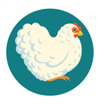 White fluffy chicken vector image