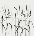 wild grass vector image vector image