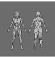Anatomy of female muscular system exercise and vector image