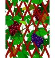 seamless grapevine vector image