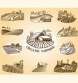 organic farming design elements vector image