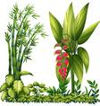 Ornamental plants vector image vector image
