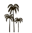 rain forest palm tree silhouettes vector image