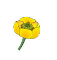 - blooming yellow water-lily vector image