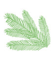 conifers on white evergreen vector image