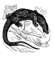 Nile monitor vintage engraving vector image vector image