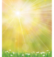 sun grass background vector image