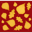 Background of gold birch and oak leaves vector image