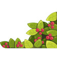 plant with berries vector image