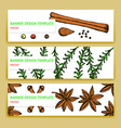 Sketch spices and herbs banners in vintage style vector image