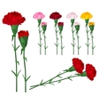 Red carnations isolated on white vector image vector image