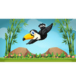 Scene with toucan flying in the sky vector image