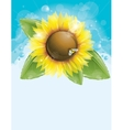 Beautiful sunflower and green leaves vector image vector image