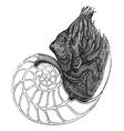 Nautilus vintage engraving vector image vector image