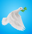 Fly dove vector image
