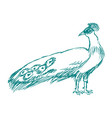 peacock side view vector image