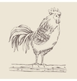 Rooster standing on a tree branch vector image