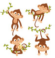 set of isolated monkey hanging on vine vector image