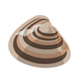 shell or seashell and sea or ocean mollusk vector image