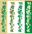 hops plant vector image vector image