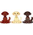 puppy labrador vector image
