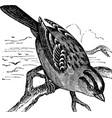 Sparrow vintage engraving vector image