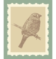 Hand drawing bird sketch vector image vector image