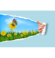 Ripped paper background with dandelions field a vector image vector image