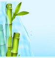 bamboo in a water splash vector image