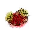 watercolor drawing of pair strawberries fruits vector image