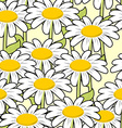 Chamomile seamless pattern Beautiful flowers vector image