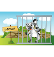 Cartoon Zoo Lemur vector image vector image