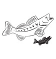 fish perch vector image