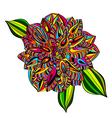 Rainbow Multicolored Dahlia vector image