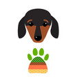 little dachshund puppy head purebred mammal sweet vector image