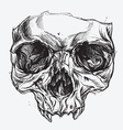 Skull Drawing vector image