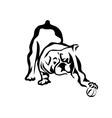 bulldog playing vector image