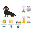 dachshund dog playing infographic elements vector image