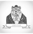 head ferocious bulldog mascot vector image