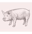 Hand drawn pig vector image